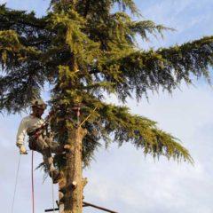 TREE-VLO