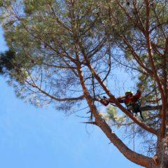 dinamika_alberi12