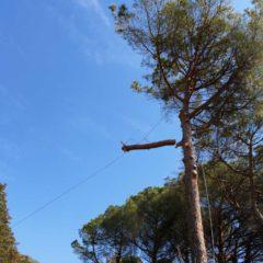 dinamika_alberi15