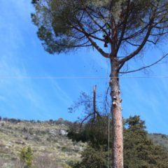 dinamika_alberi16