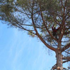 dinamika_alberi17