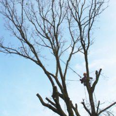 dinamika_alberi27