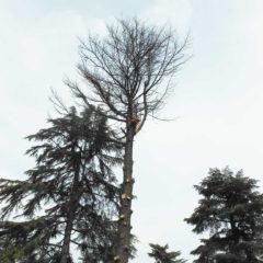 dinamika_alberi32