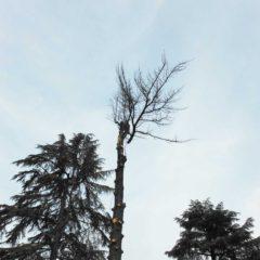 dinamika_alberi34