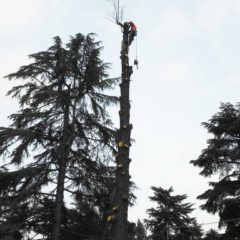 dinamika_alberi35